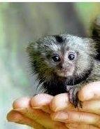 tiny monkey.jpg