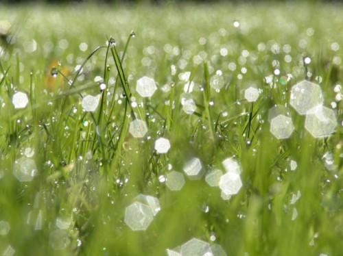 rosée herbe.jpg