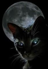 dreams,dream interpretation,christiane riedel,judith saint laurent,incubation,cat, café